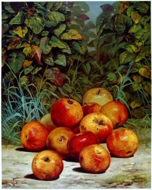 3b51100r(appleprint)