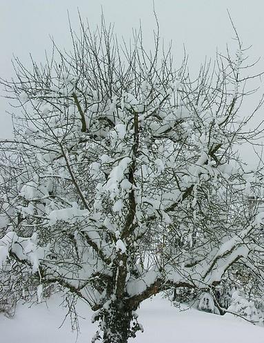 WinterOrchard#1