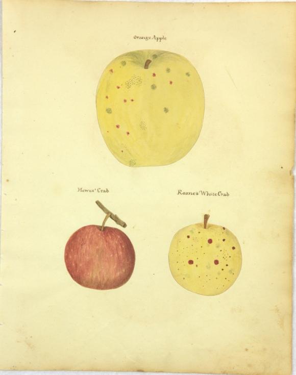 Orange Apple