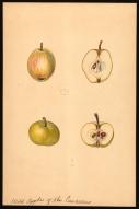 Wild Apples of the Caucasus