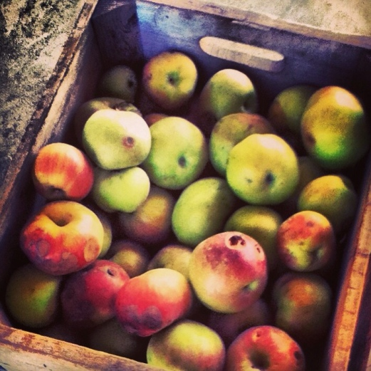 Apples in a crate at Albemarle Vintage Virginia
