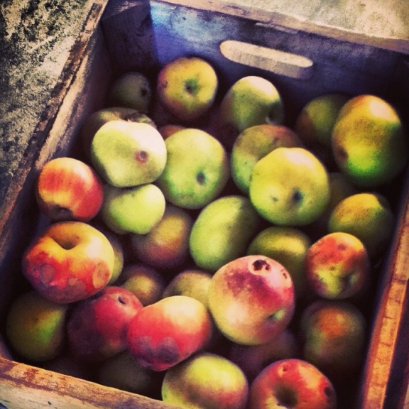 Apples in a crate at Albemarle Vintage Virginia