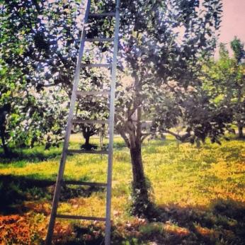 Orchard at Vintage Virginia Apples