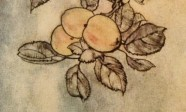 Rackham Lady's Apple