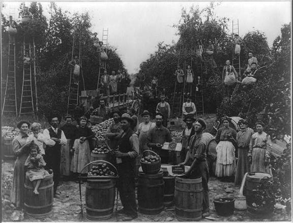 Apple picking in Berkeley County, West Virginia. Photoprint by Smith Brothers, Martinsburg, W. Va. Library of Congress.